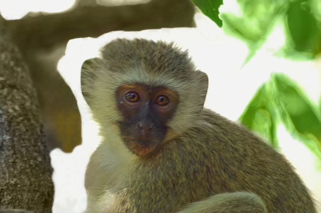 zol素材 高清图片 可爱猴子图片下载  z金豆:0 下载量:2 请进行资源